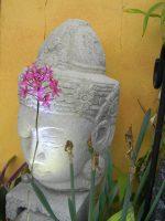 Dharma Group