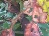 Dorothy - May 21 meetup Texture